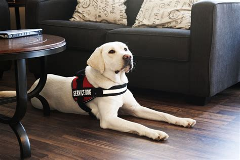 dogs to be service dogs 15 ways a can improve your verb media