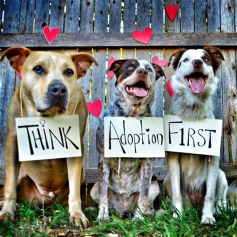 adopting a puppy five reasons why adopting a is better
