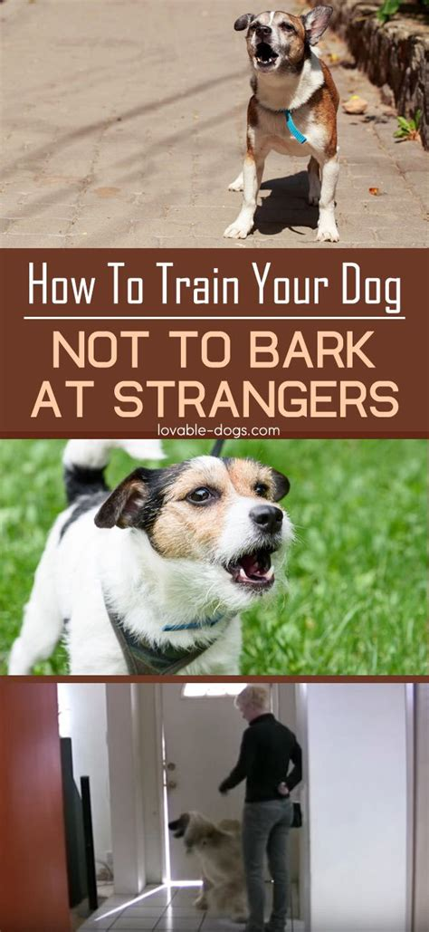 how to your not to bark at 25 b 228 sta barking at nothing id 233 erna p 229 tips om att tr 228 na hunden