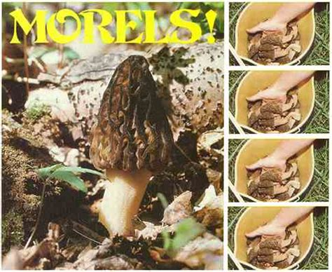 don't miss out on morel hunting nature community