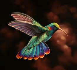 hummingbird colors 25 best ideas about hummingbirds on