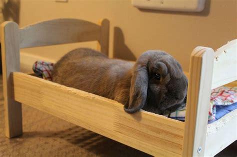 bunny bed bunny bed bunnies pinterest