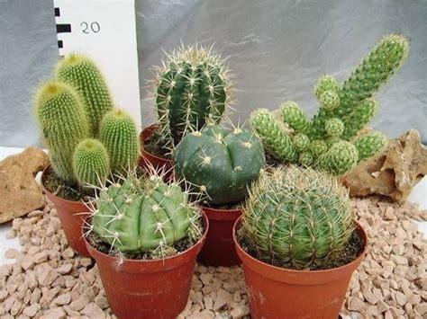 piante in cura piante grasse piante grasse come prendersi cura