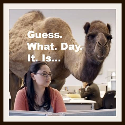 geico camel commercial hump day geico camel commercial hump day luvonpurpose i don t