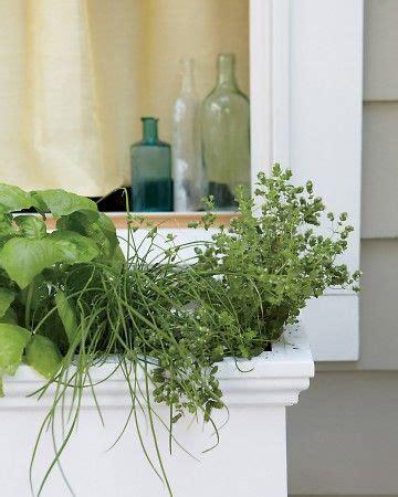 window box herb garden 17 best images about healing herbs on pinterest