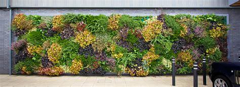 green walls installer green walls maintenance eco art