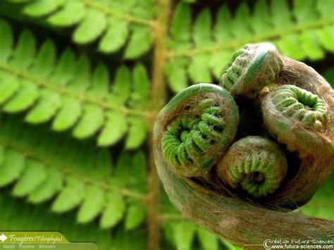 plante carnivore 6 lettres