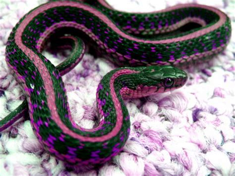 colorful snake | flickr photo sharing!