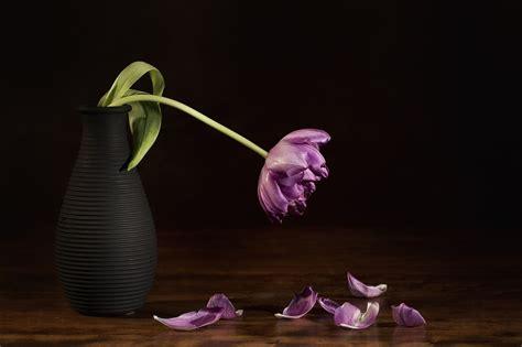 imagenes de flores marchitas c 243 mo revivir las flores marchitas solo con agua