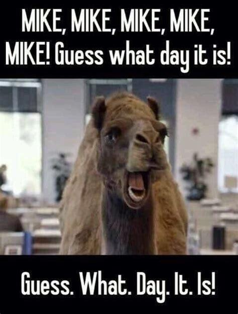 Camel Hump Day Meme - hump day camel photos pinterest mike d antoni hump