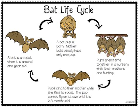 my full batty for bats file includes an interactive bat
