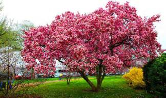 best trees six of the best trees for clay soils garden style express co uk