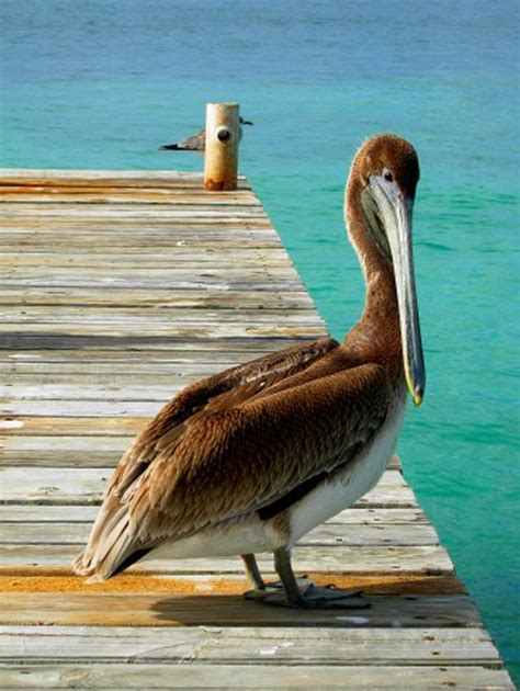 putih the traveling pelican books top 10 things to do in vallarta mexico
