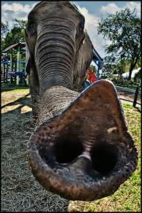 elephant trunk this is a true story i m walking around