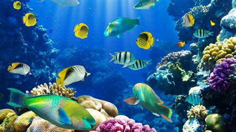 wallpaper for desktop fish bing live wallpaper awesome wallpaper backgrounds hd