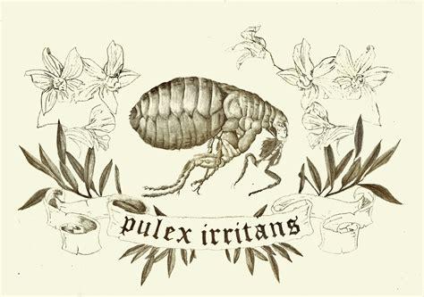 flea tattoos flea design by thisisfilthy on deviantart