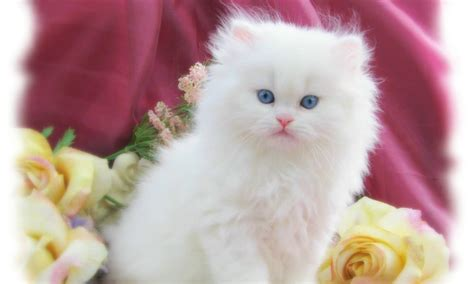 cat easter wallpaper 2013 top 25 cure easter day wallpapers for android phones