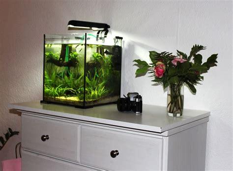 acquario casa acquario allestimento accessori casa decorazione acquari