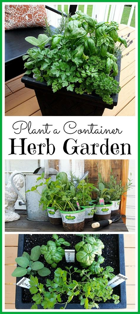 planting an herb garden tips for planting a container herb garden