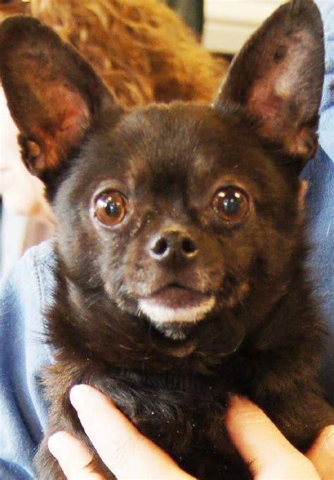 minneapolis rescue shelter sunday cities pet rescue minneapolis mn doggies