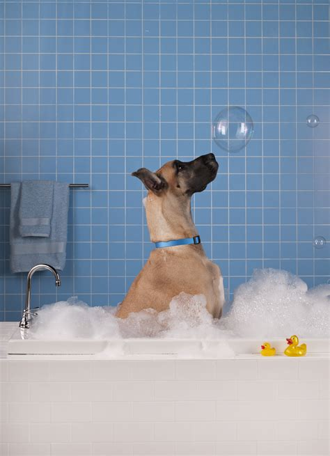 bathtub dog bath