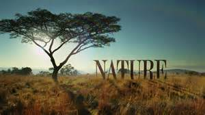inside nature s new opening sequence nature pbs
