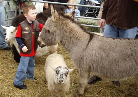 petting zoo petting zoos portland  seattle wa