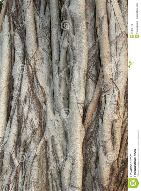 tree up structures of a banyan tree in up china stock