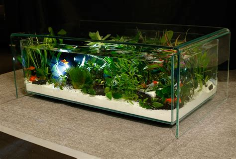 coffee table aquarium coffee table aquariums design maiao manihi table