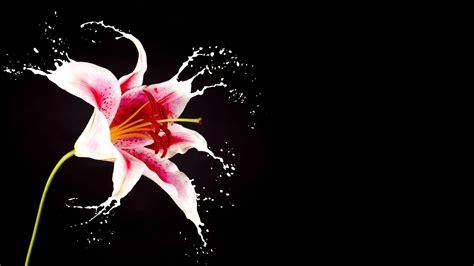 fiori the con l estate questi borghi si riempiono di fiori ed 232 un