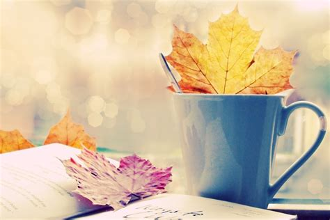 coffee autumn wallpaper autumn maple leaves in coffee cup high definition hd