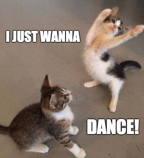 Fuck You Cat Meme - happy friday dance cat www pixshark com images