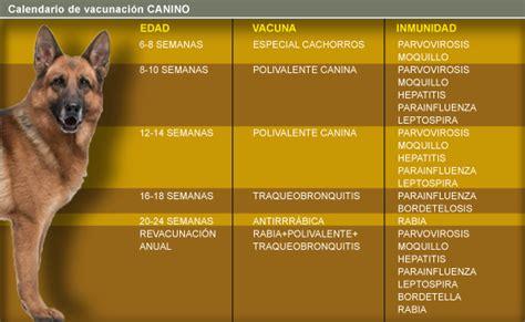 Calendario Canino Calendario De Vacunaci 243 N Para Perros Y Gatos Taringa