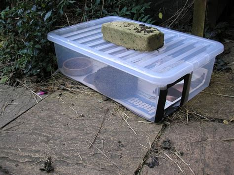 Hedgehog Feeder how to stop cats dogs and foxes stealing the hedgehogs