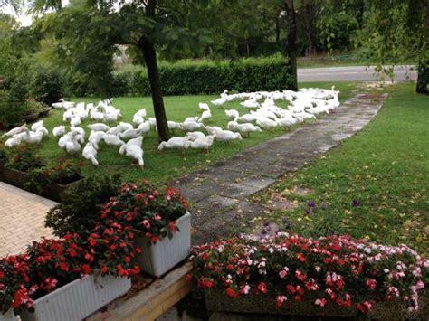 agriturismo ai giardini oche in giardino foto di agriturismo ai laghetti meolo
