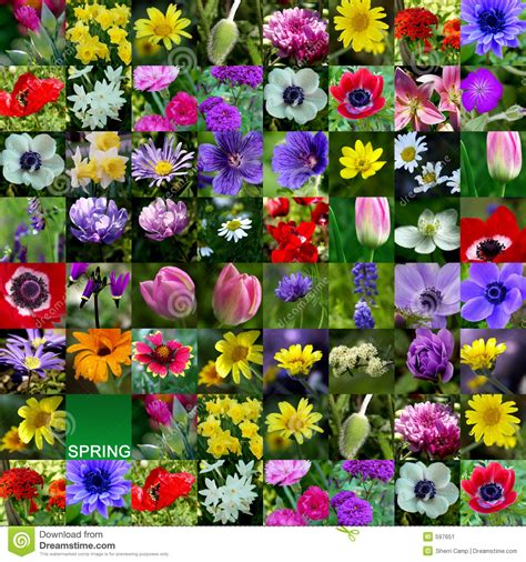 Flower Collection flower collection stock image image of springtime