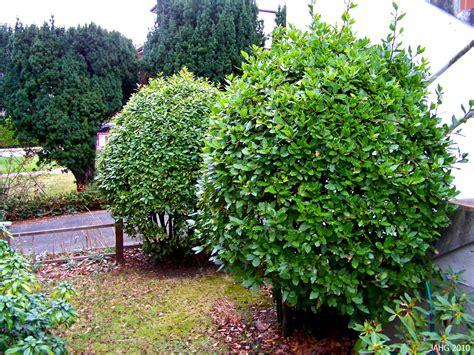 bay laurel the garden palette