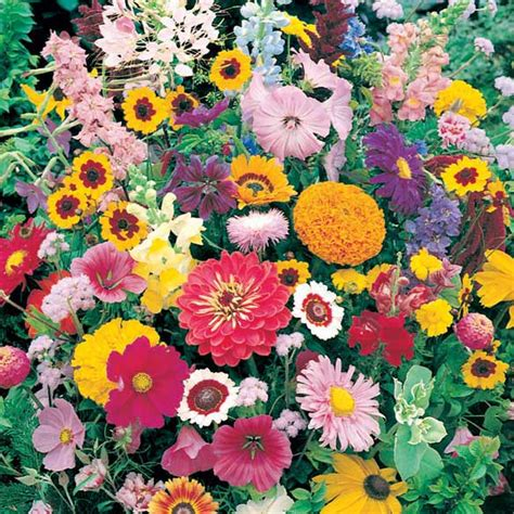 Roll Out Flower Garden Instant Roll Out Flower Garden Instant Flower Garden