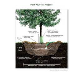 green landscaping is in what is it basics of eco