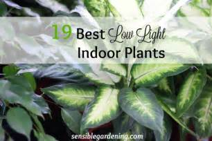 Plants That Need No Light by 19 Best Low Light Indoor Plants Sensible Gardening And