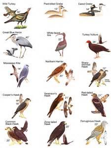 Dove Barn Birds Of Trigg Road