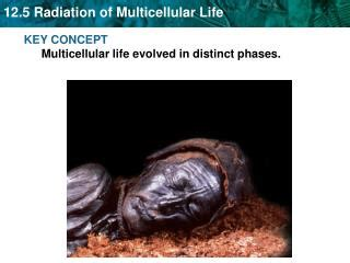 section 17 3 evolution of multicellular life ppt chapter 17 section 3 evolution of multicellular life