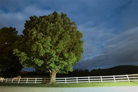trees images free stock photo of night tree