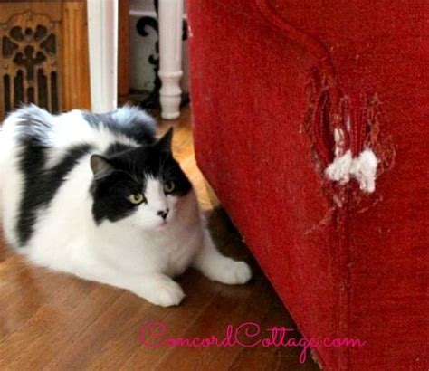 cat scratches couch hometalk how to repair a cat scratched chair or sofa