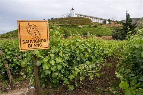 sauvignon blanc best where to find the best sauvignon blanc wine folly