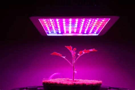 zimtown led grow light review mars hydro 300w led grow light review things you should