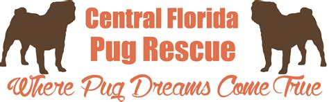 pug rescues in florida central florida pug rescue where pug dreams come true