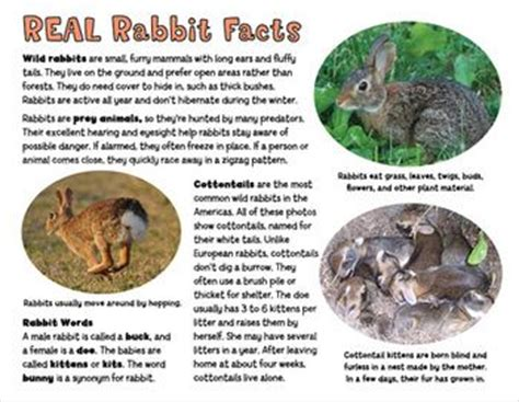 informational texts nonfiction and rabbit on pinterest