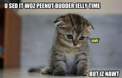 Kitten Meme - cat memes damn cool pictures