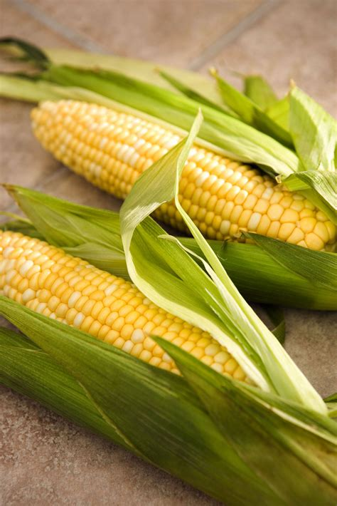 ate corn cob corn on the cob a sure sign of summer spend smart eat smart iowa state